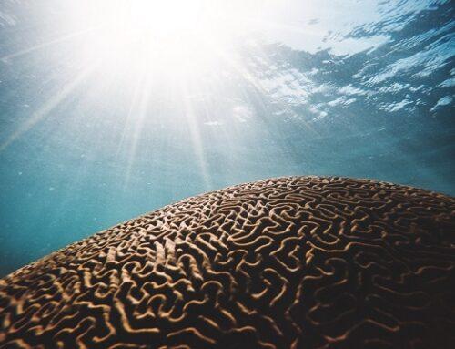 Plasticità cerebrale: come l'apprendimento cambia il cervello